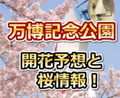 万博記念公園,大阪,万博記念公園,花見,2018,大阪,開花予想,穴場,桜