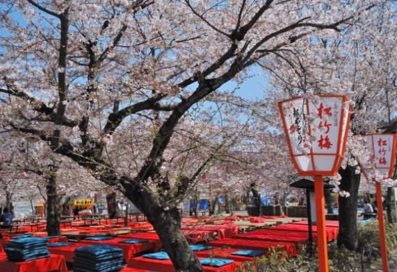 円山公園,花見,2019年,京都,開花予想,穴場,桜,しだれ桜,枝垂桜