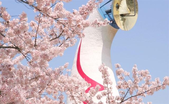 万博記念公園,大阪,万博記念公園,花見,2019年,大阪,開花予想,穴場,桜