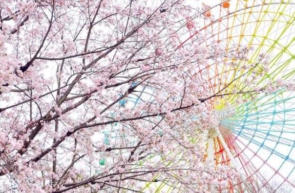 西の丸庭園,大阪,花見,2019年,大阪,開花予想,穴場,桜