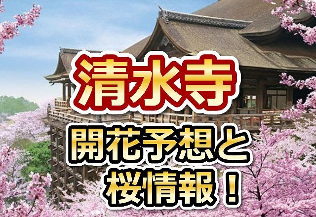 清水寺,京都,花見,2018,京都,開花予想,穴場,桜