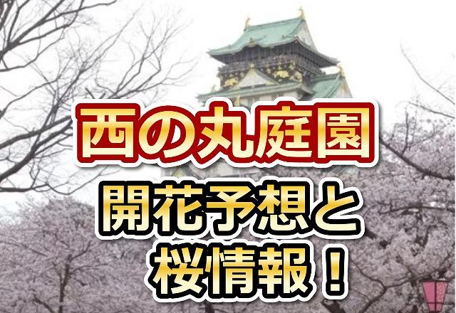 西の丸庭園,大阪,花見,2018,大阪,開花予想,穴場,桜