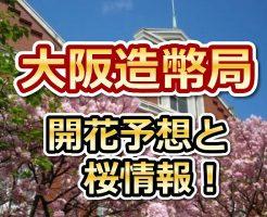 大阪造幣局,花見,2018,大阪,開花予想,穴場,桜