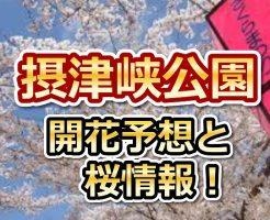 摂津峡公園,花見,2018,大阪,開花予想,穴場,桜