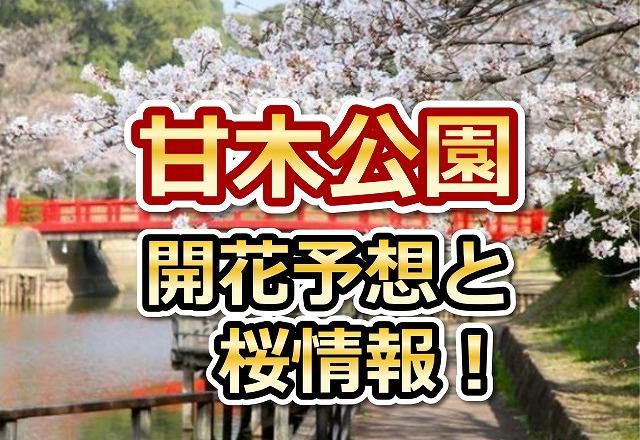 甘木公園,福岡,花見,2018,見頃,開花予想,穴場,桜