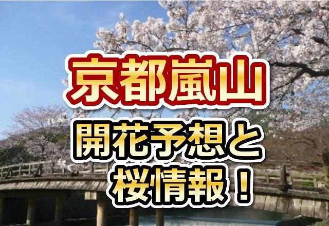 嵐山,京都,花見,2018,開花予想,穴場,桜