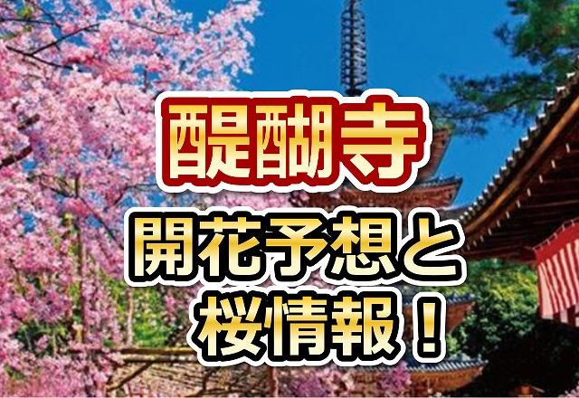 醍醐寺,京都,花見,2018,京都,開花予想,穴場,桜