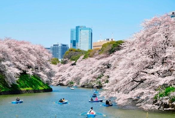 千鳥ヶ淵公園,東京,花見,2019年,開花予想,穴場,桜