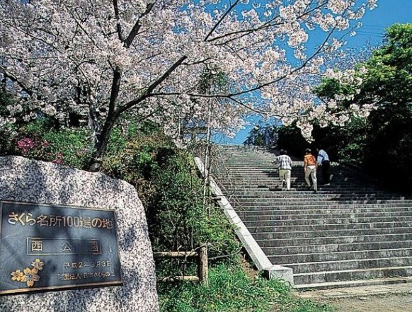 西公園,福岡,花見,2018,福岡,開花予想,穴場,桜