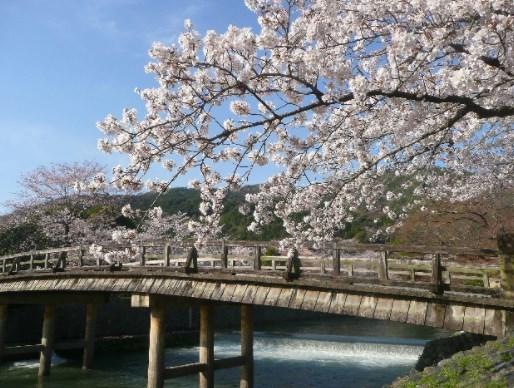 嵐山,京都,花見,2019年,開花予想,穴場,桜