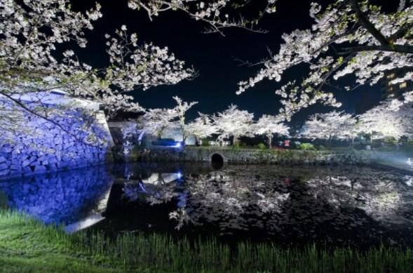 舞鶴公園,福岡,花見,2019年,開花予想,穴場,桜