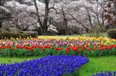 東京,花見,穴場