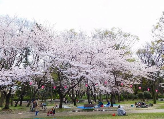 名城公園,名古屋,花見,2019年,開花予想,穴場,桜