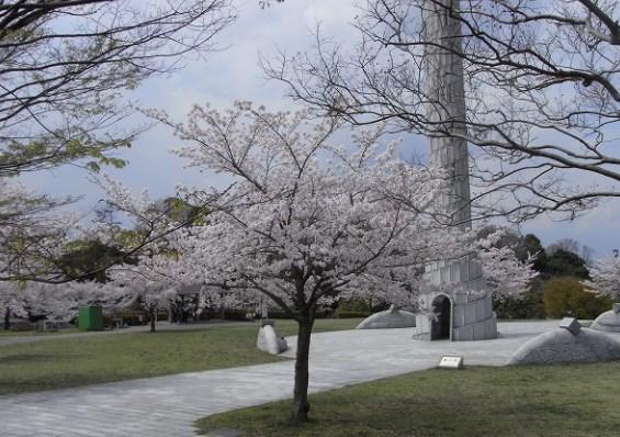 平和公園,名古屋,花見,2018,見頃,開花予想,穴場,桜
