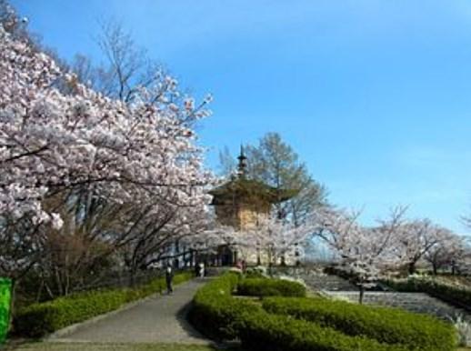 平和公園,名古屋,花見,2019年,見頃,開花予想,穴場,桜