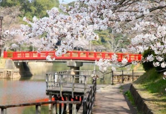 甘木公園,福岡,花見,2019年,見頃,開花予想,穴場,桜