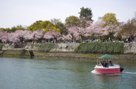 平和記念公園,広島,花見,2019年,見頃,開花予想,穴場,桜