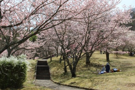 鏡山公園,広島,花見,2018,見頃,開花予想,穴場,桜