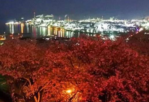 亀居公園,広島,花見,2019年,見頃,開花予想,穴場,桜