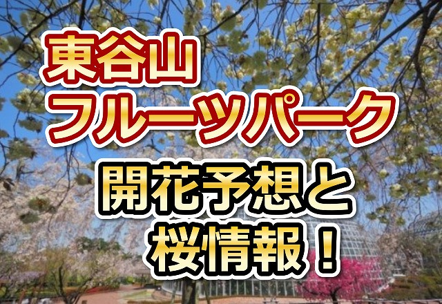 東谷山フルーツパーク,愛知,花見,2018,愛知,開花予想,穴場,桜
