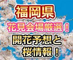 福岡,花見,2018,桜,見頃,おススメ,穴場.スポット,デート