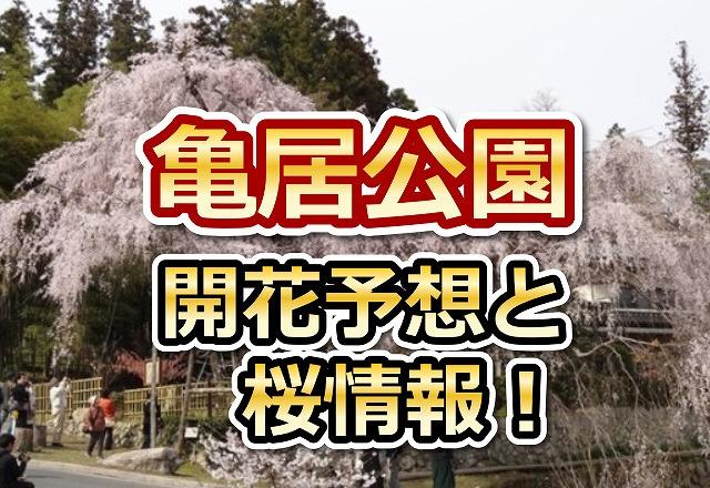 亀居公園,広島,花見,2018,見頃,開花予想,穴場,桜