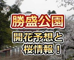 勝盛公園,福岡,花見,2018,見頃,開花予想,穴場,桜