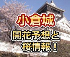 小倉城,福岡,花見,2018,見頃,開花予想,穴場,桜