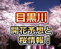 目黒川,東京,花見,2018,開花予想,穴場,桜