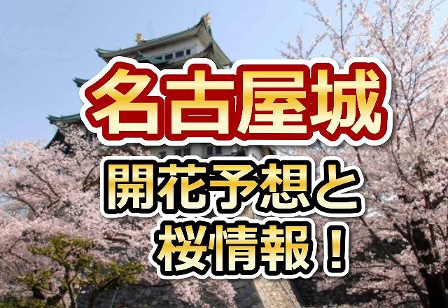 名古屋城,花見,2018,名古屋,開花予想,穴場,桜