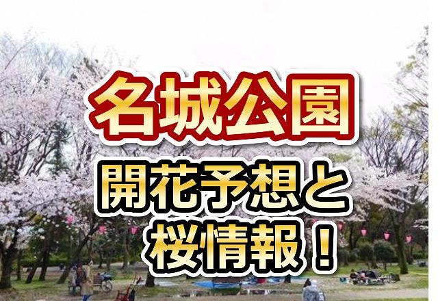 名城公園,名古屋,花見,2018,開花予想,穴場,桜