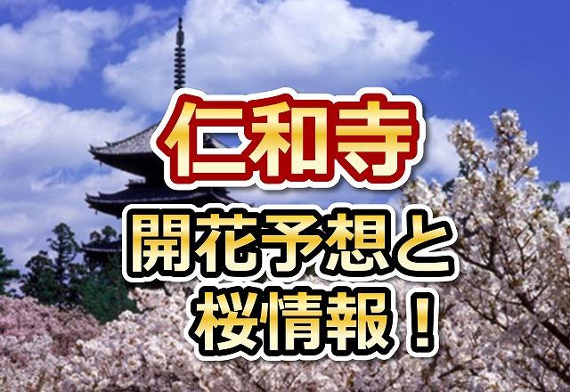仁和寺,京都,花見,2018,開花予想,穴場,桜