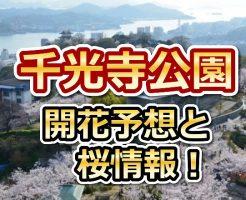 千光寺公園,広島,花見,2018,見頃,開花予想,穴場,桜