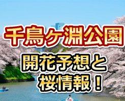 千鳥ヶ淵公園,東京,花見,2018,開花予想,穴場,桜