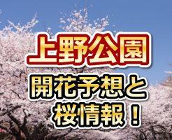 上野公園,東京,花見,2018,東京,開花予想,穴場,桜