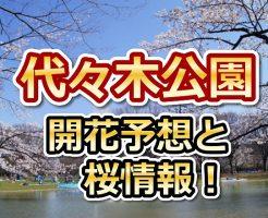 代々木公園,東京,花見,2018,東京,開花予想,穴場,桜