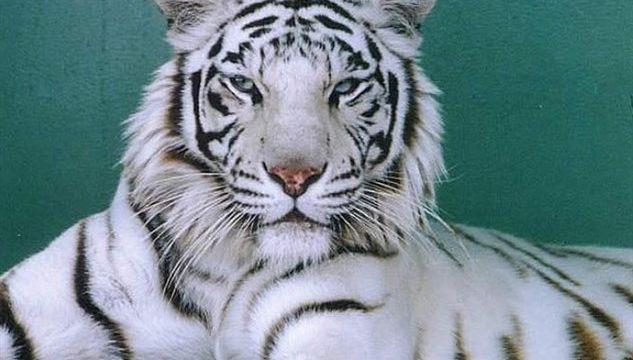秋吉台自然動物公園