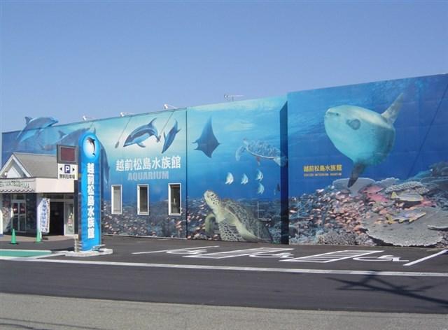 越前松島水族館,GW,2020,混雑予想,混雑状況,駐車場,待ち時間,攻略